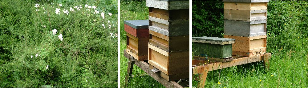 Bee hives from Mill Lane Beekeeping